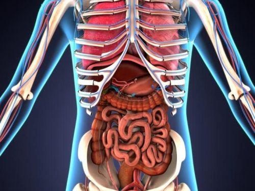 Здраве отвътре - хранителни добавки